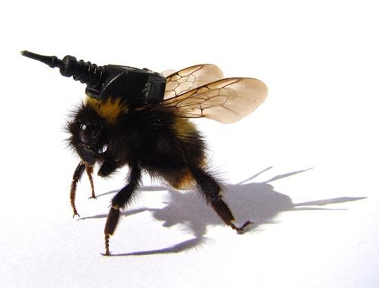 Exército de insetos 01