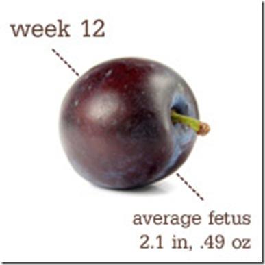 Plum - 12 Weeks