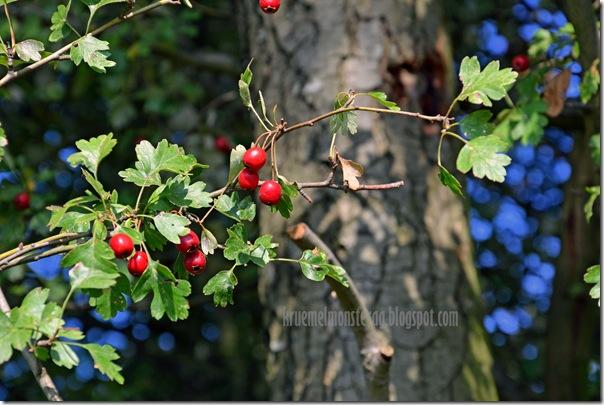 Herbstsonntag (12)