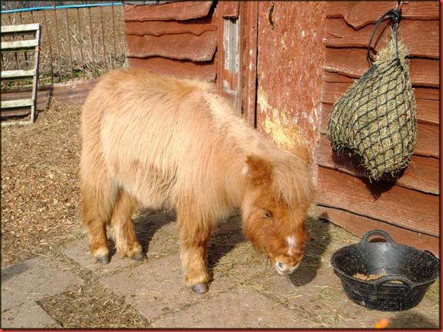 Elvis pony4a