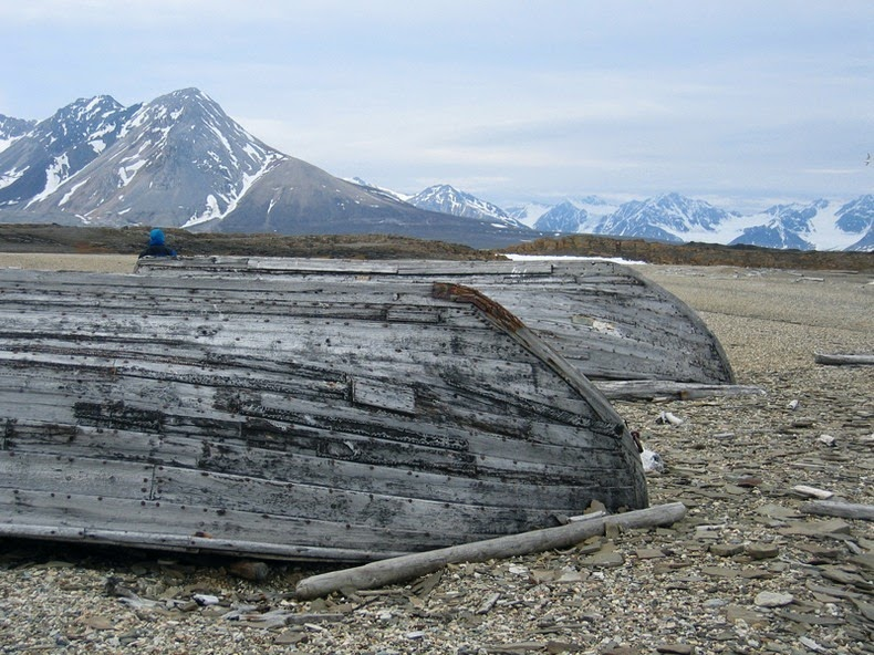 beluga-whale-bones-10