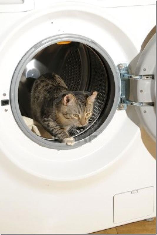 gatos lavadora (3)