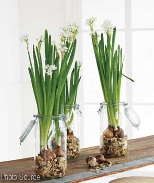 Homework A Creative Blog The Dirt Forcing Bulbs For