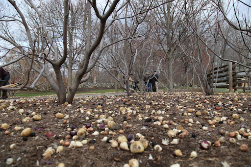 Will you just look at these thousands upon thousands of bulbs?  Since we know how to plant, let's get our paws to work and help.  I simply can't wait for Spring!