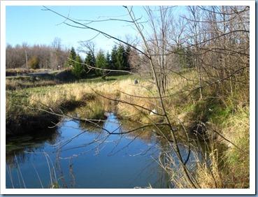 20111105_creek_002