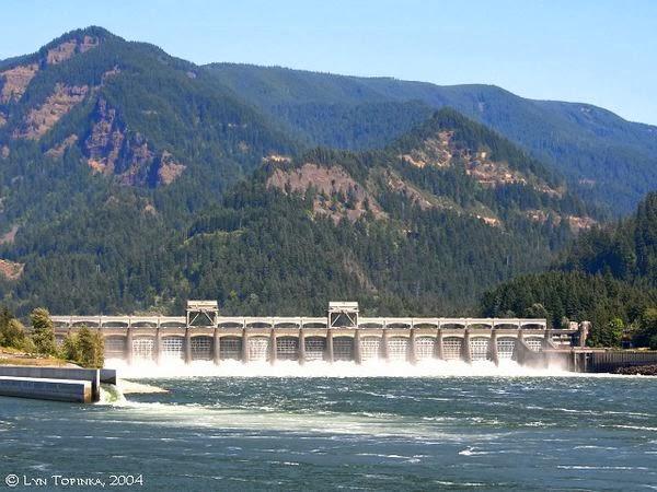 Bonneville Dam (Orgeon) 海獅水上墳場