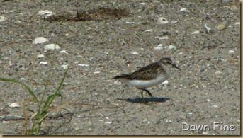 Birding south beach_078
