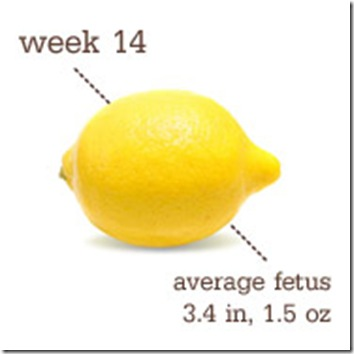 14 Weeks-Lemon