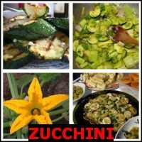ZUCCHINI- Whats The Word Answers