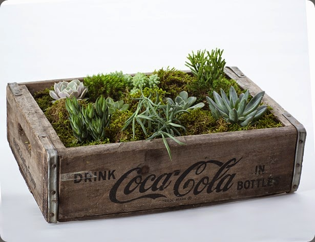 Succulents wooden-box-8518low by the bloom