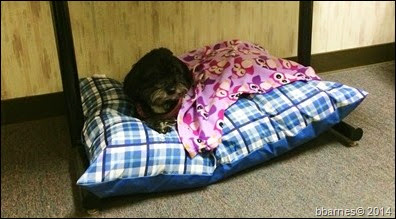 Maggie bed 2 10062014