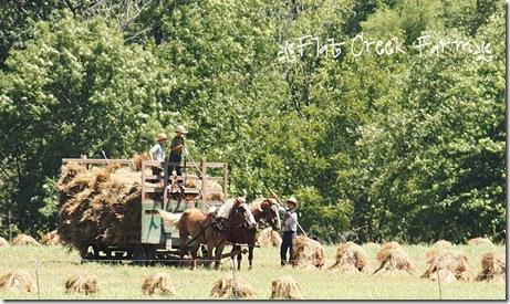 making_hay