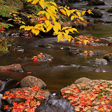 Little Carp River in the Fall # 3 / Porcupine Mountains / Upper Michigan