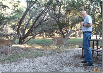 Deer visit 014