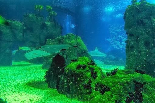 lizbona-oceanarium