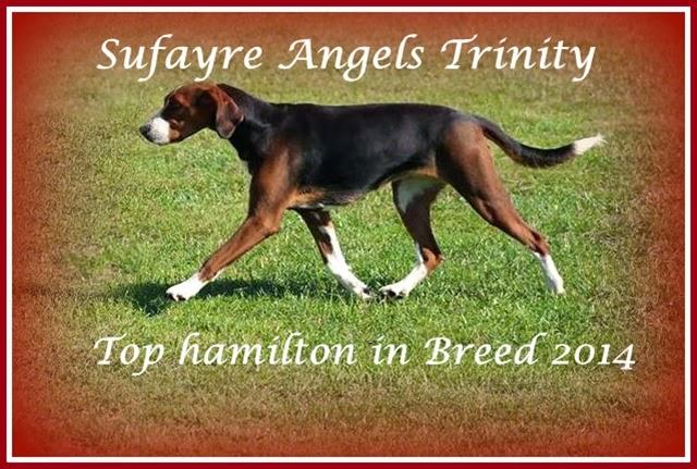 Sufayre Angels Trinity