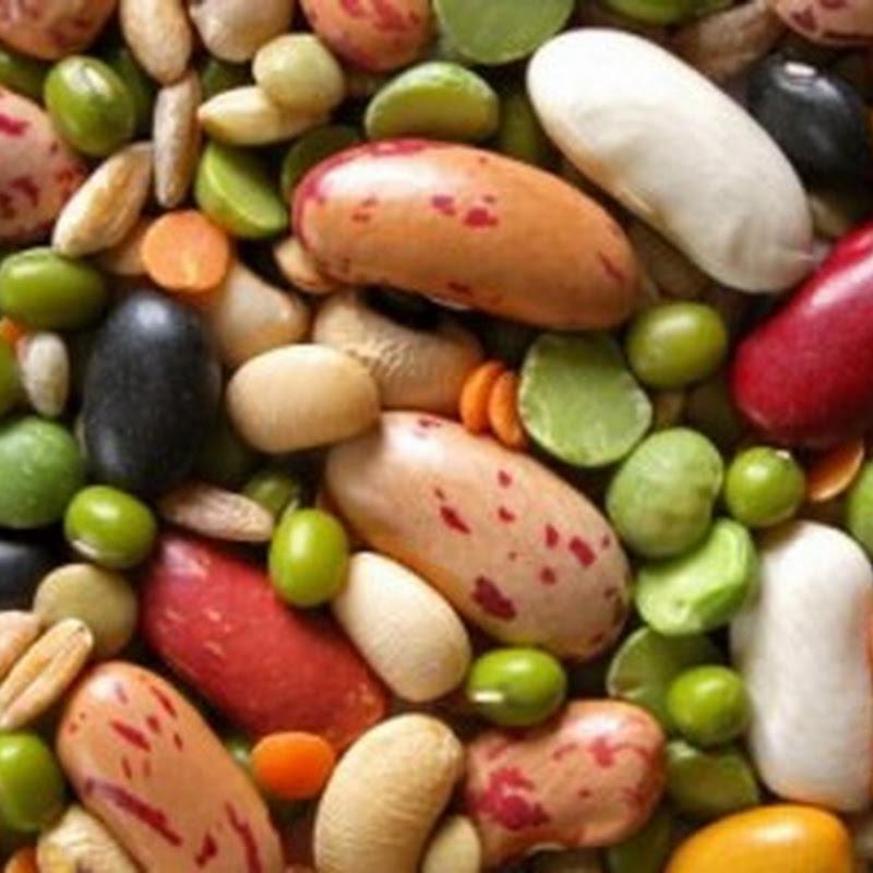 Lợi ích của Protein