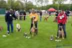 20100513-Bullmastiff-Clubmatch_30854.jpg