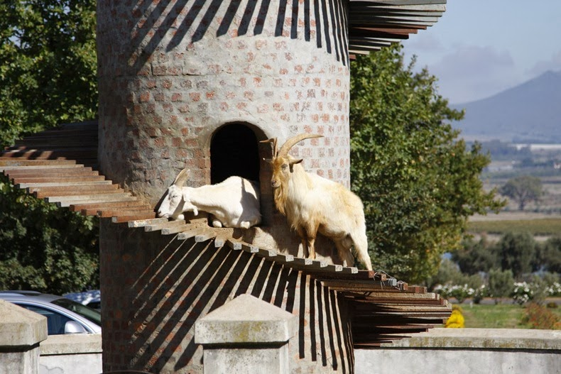 goat-tower-6