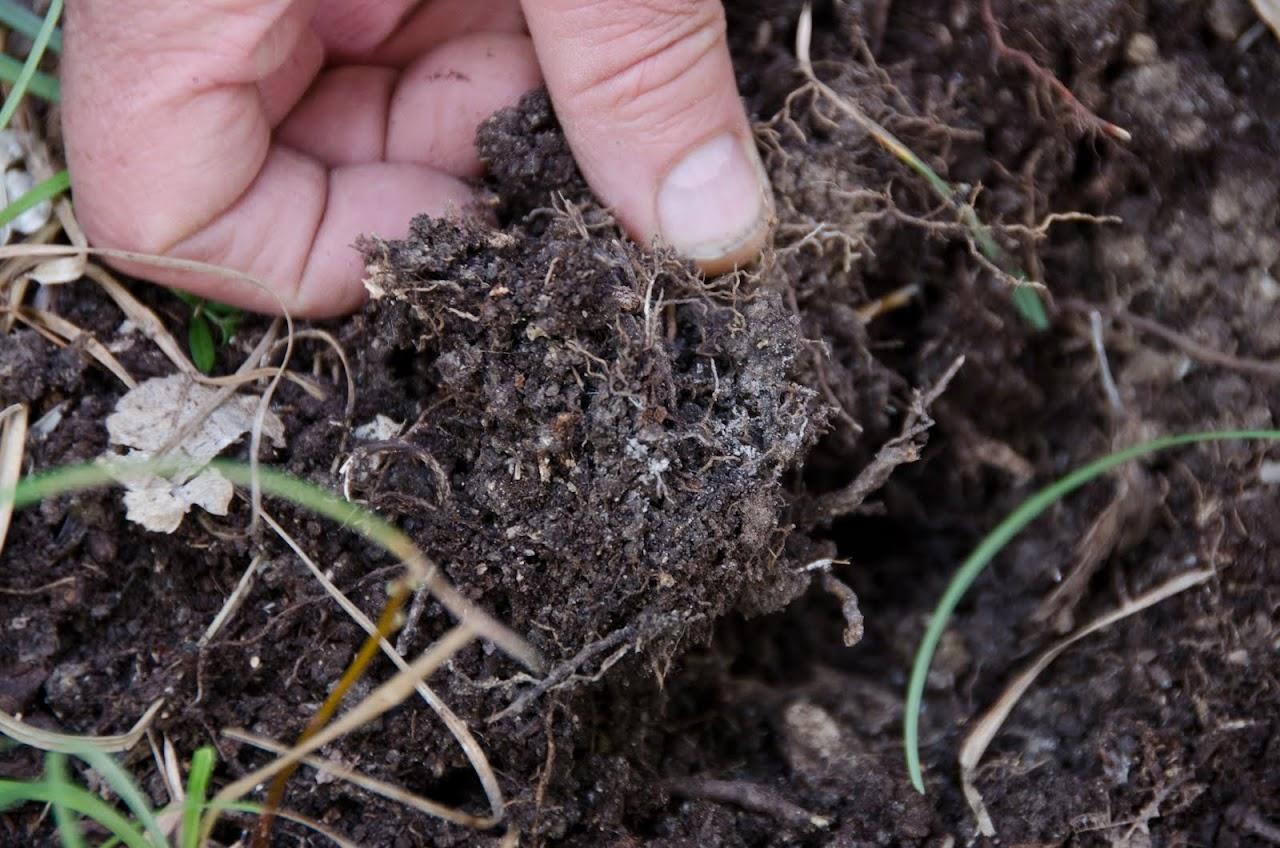 Removing soil