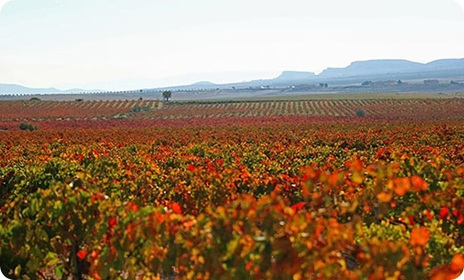 monastrell-yecla-peninsula-vinhos