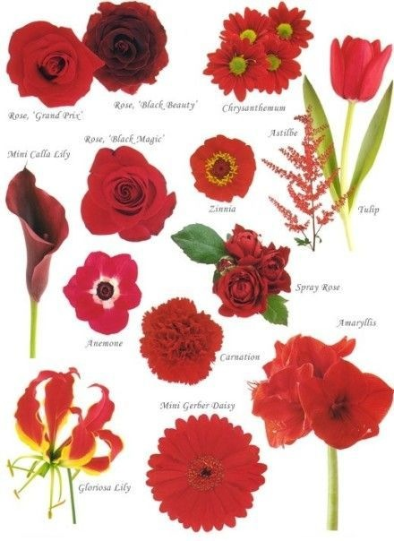 Know Your Flowers 1