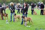 20100513-Bullmastiff-Clubmatch_30929.jpg