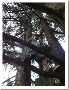 p up in a tree with j higher