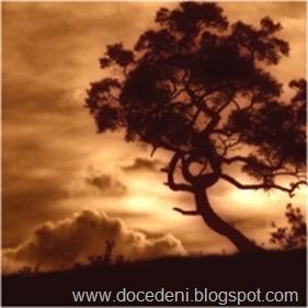 A-Posição-Correta-de-uma-Árvore-Torta