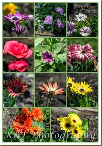 Flowers 2014PicMonkey Collage