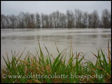 Piena del Reno a Padulle - 31 gennaio 2014 (24)