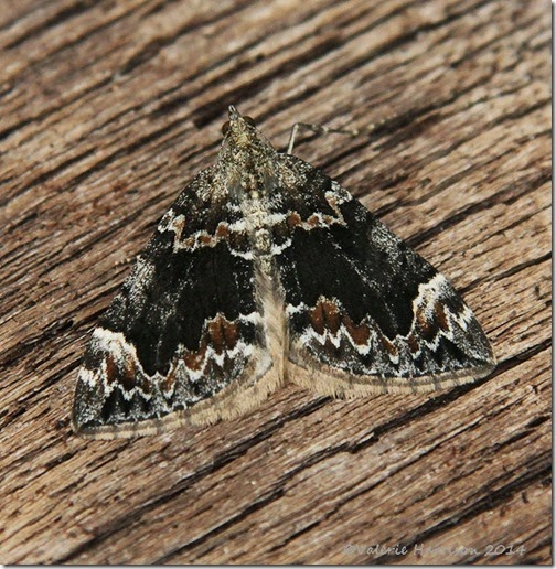 dark-marbled-carpet