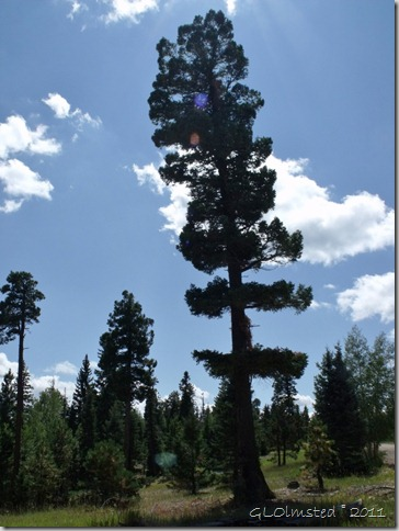 06 Kaibab NF (768x1024)