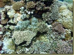 Coral garden-4