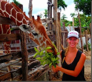 giraffe Calauit Safari park