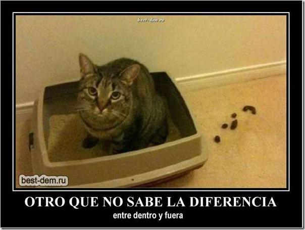 desmotivaciones gato 1