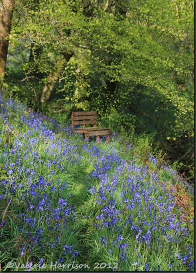 bluebell-seat
