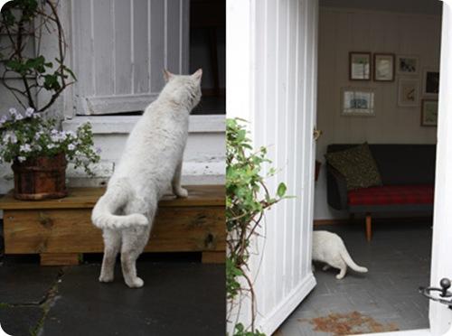 kattebesøk