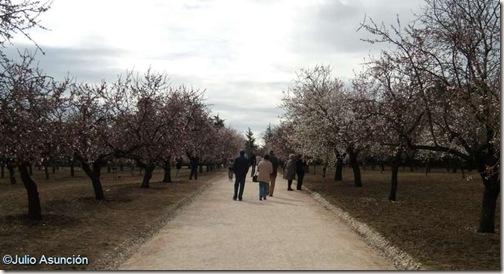 Campos de almendros en la Quinta de los Molinos - Madrid