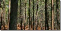 floresta1-660x330