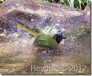 Bentsen Birds 031