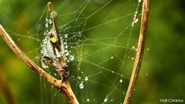 Teia de aranha incrível bonita