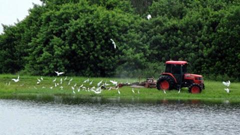 egrets mower