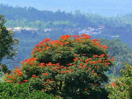 10. Flori in Bali.JPG