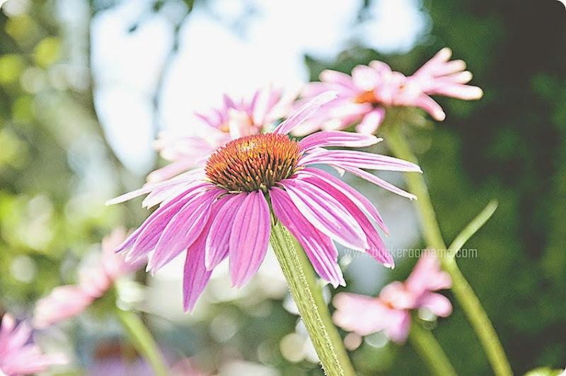 Flower-(1)