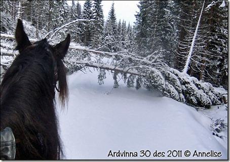 ardvinna-30-12-2011_03