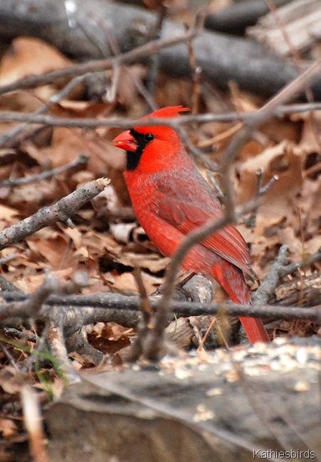 11. cardinal-kab