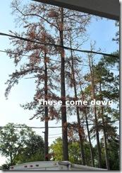 Trees 1,2,3,4,5