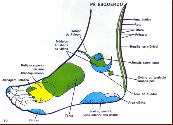 Reflexologia Mapa do P Esquerdo Lateral