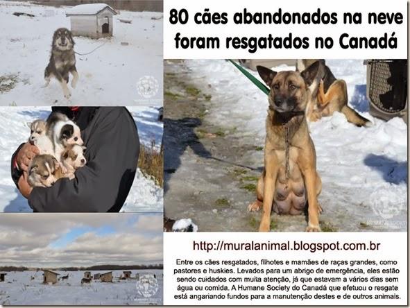 80caes-canada